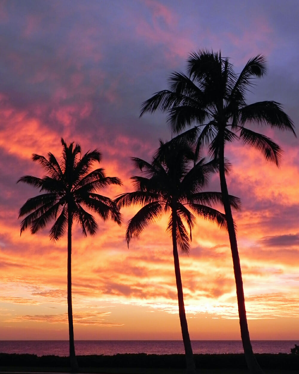 Hawaii sunset with coconut palms