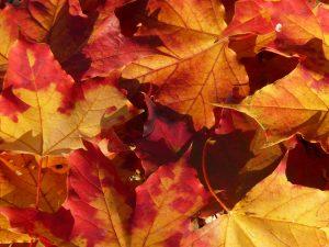 autumn_journal_leaves