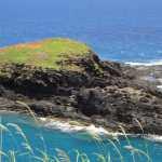 Friday Fotos — Kilauea Lighthouse Point Wildlife Refuge