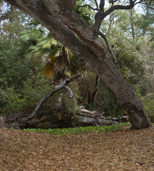 Buena Vista Park – a cool place and a great destination