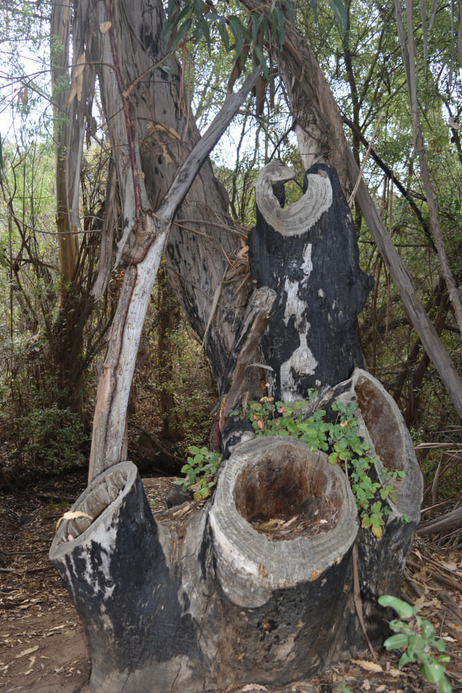 Ageless beauty...these old stumps caught my attention.