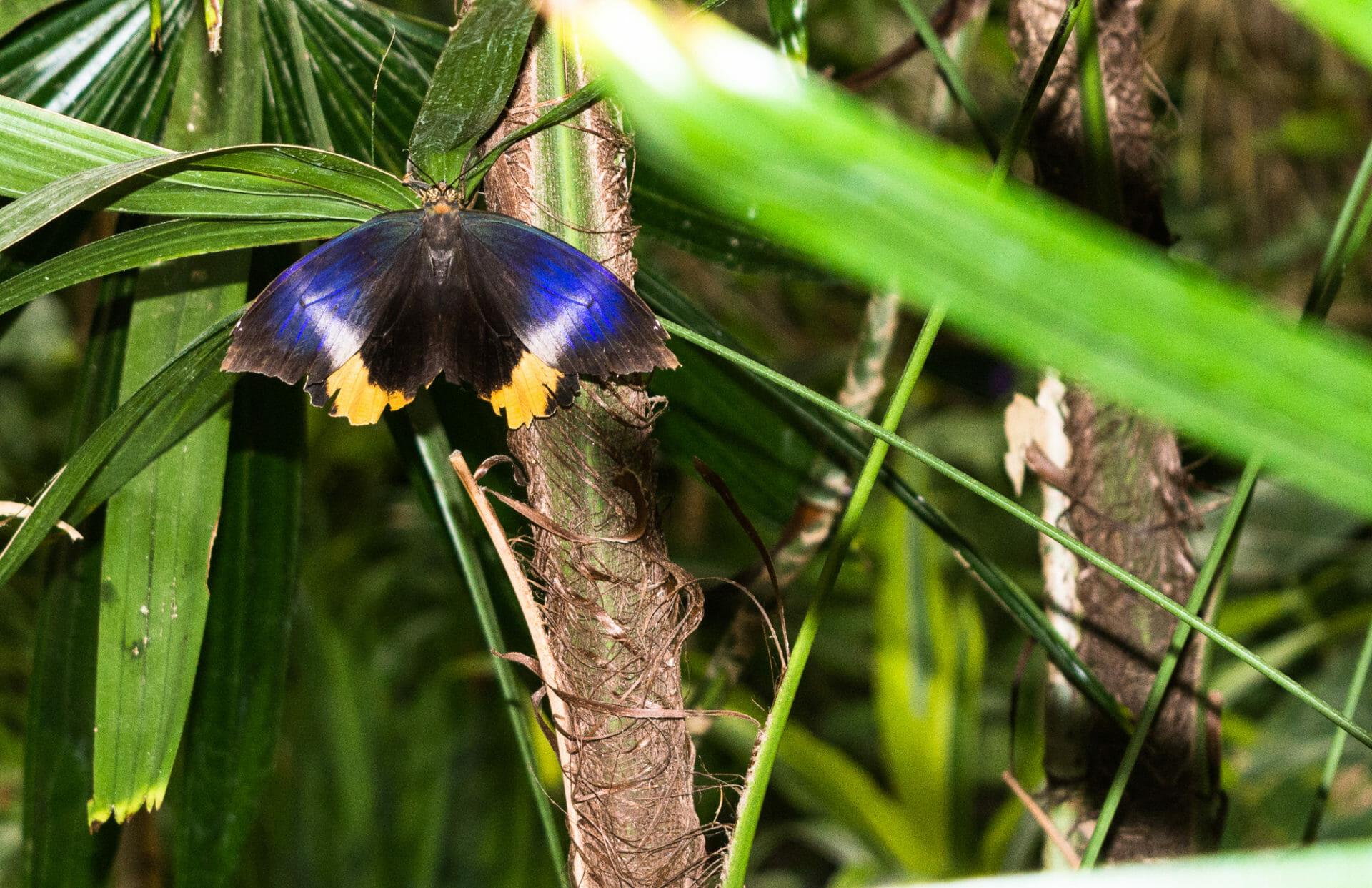 Butterfly Jungle 2017 #4