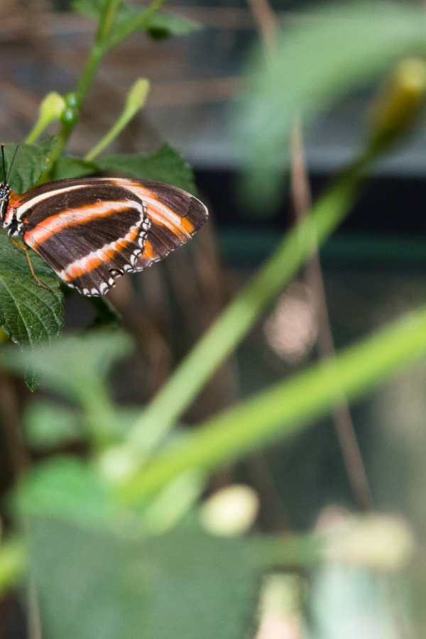 Destination — Butterfly Jungle at San Diego Zoo Safari Park