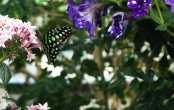 Butterfly Jungle #10