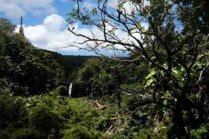 Waterfall on Big Island near Laupahoehoe