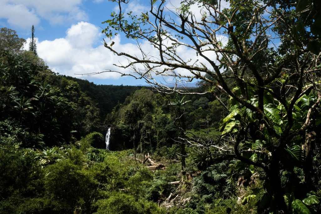 Big Island waterfalls abound - near Laupahoehoe