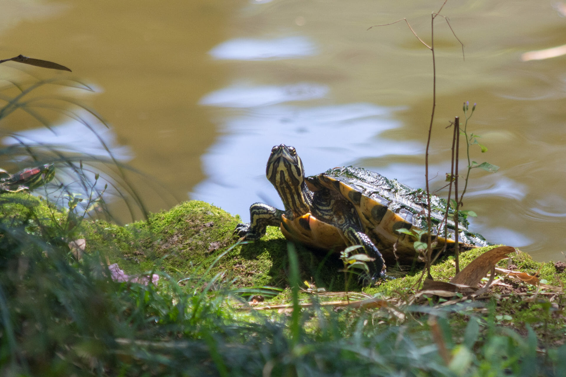 Turtle friend eying the camera