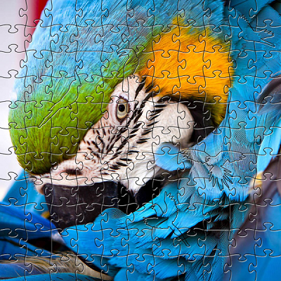 Blue Parrot Large Puzzle by Zen Art & Design