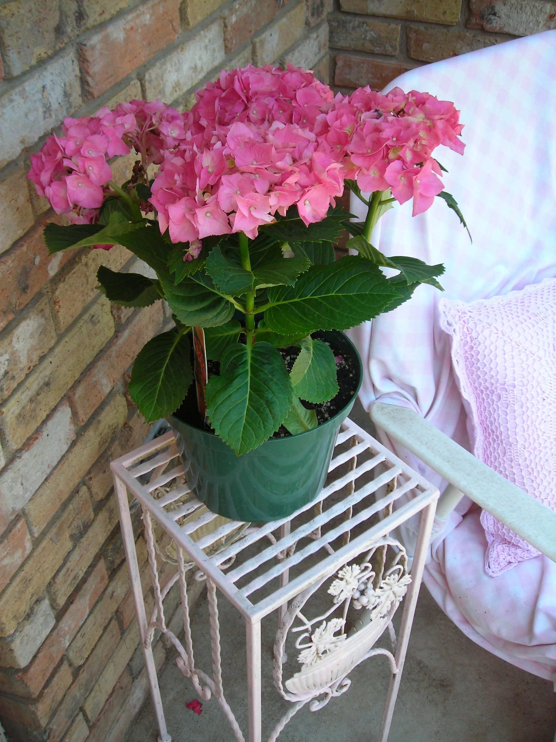 LOVE these pink hydrangeas! set them next to an old lawn chair covered in a vintage pink and white bedsheet, finished off with a pink pillow from big lots.