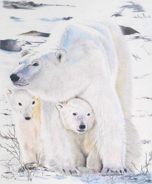 """""""Polar Bears"""" (Photo courtesy of WFP) Colored Pencil 8.5 x 11 - SOLD"""