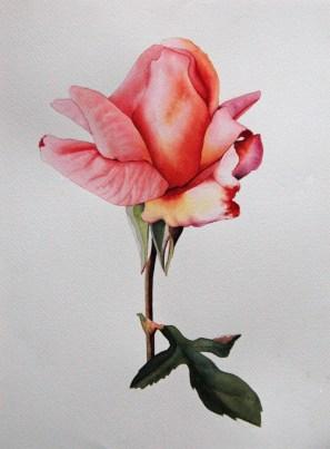 Birthday Rose 9 x 12 - Watercolor