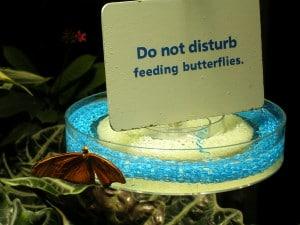 butterfly feeding station