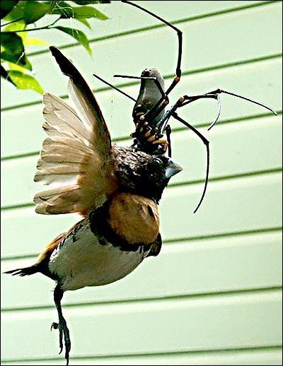 Spiderd Bird