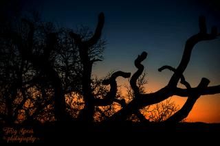sunset-at-writers-retreat-937