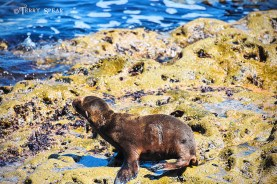 Baby seal 900 San Diego 4205
