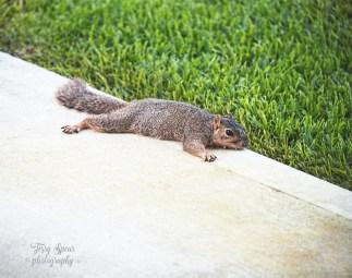 chilling squirrel 900 066