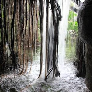 Rainforest waterfall--Moody Gardens