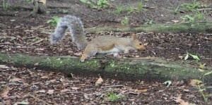 Squirrel in Cemetery AAD Conference, 2013, Savannah 177 (800x398) (2)