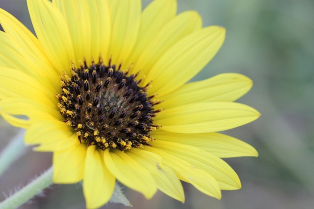 sunflower just right (640x427)