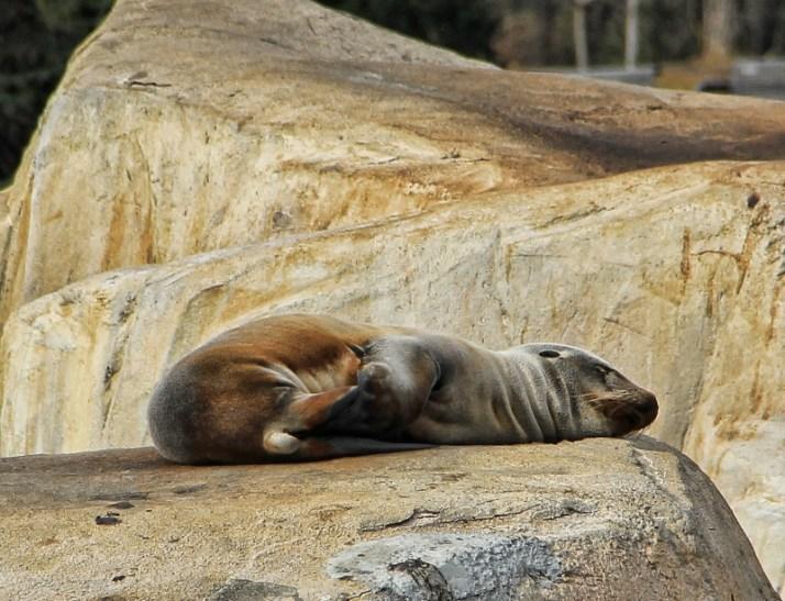 Omaha Zoo, Thanksgiving 2012 139 (800x613)