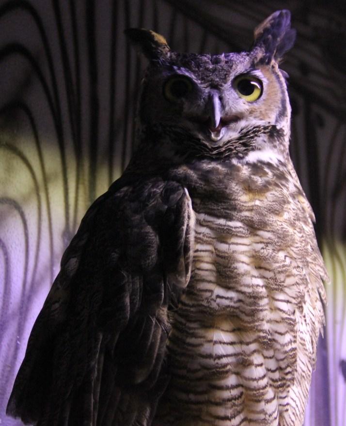 owl blue light