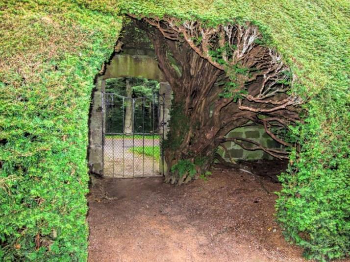 Crathes Castle, Oct, hedge arch pop (800x600)