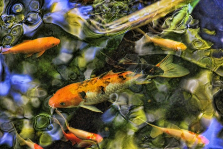 fish looks like a painting (800x533)