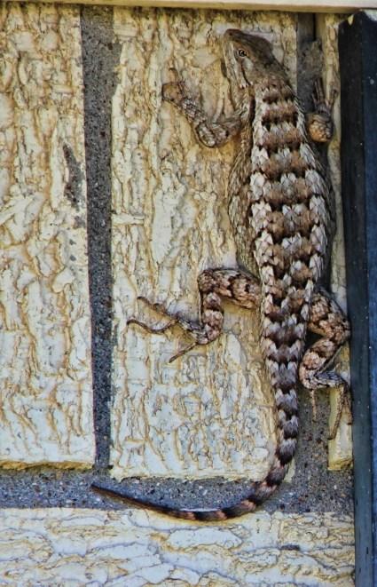huge lizard 004 (551x800)