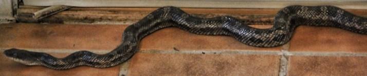Snake returns (800x166)