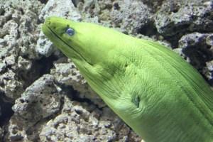 eel (800x533)
