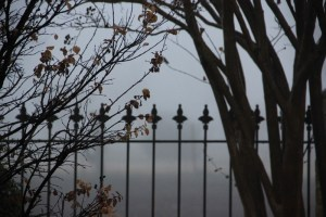 fog 005 (800x533)