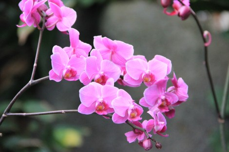 Moody Gardens orchids 3