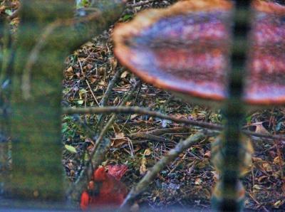cardinal sleet (400x298)