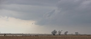 flowers storms cattle (640x281) (2)