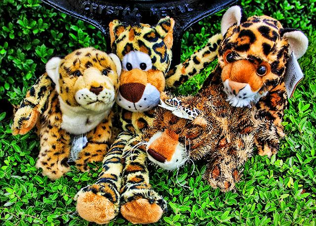 jaguar buddies
