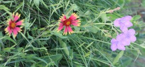 wildflowers (640x300)