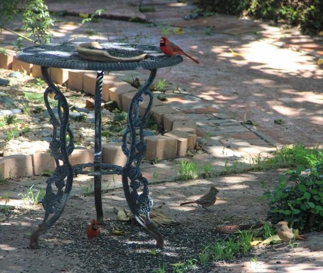 4 cardinals, 2 males, 2 females