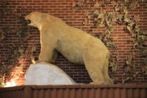Country White Bear Inn Polar Bear (640x427)