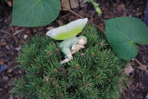 Tiny fairy sleeping