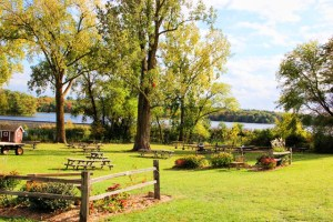 Pine Tree Apple Farm Picnic Area