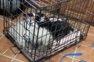 puppies slept in crate instead