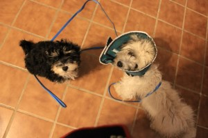 Tanner and Max conehead 004 (640x427)