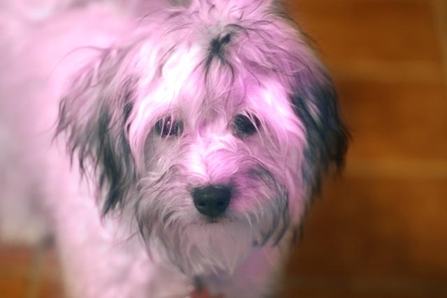 Pink Max