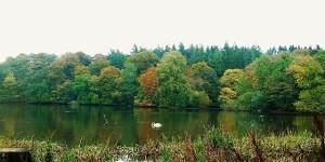 Fall colors Scotland, Swan and Cormarant