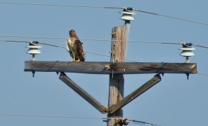 hawk turned around