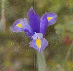 iris antique book (640x626)