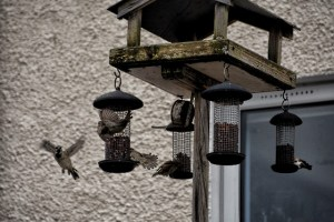 birds in flight on feeders (640x427)