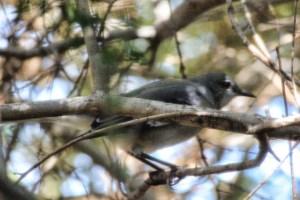 bird 017 (640x427)