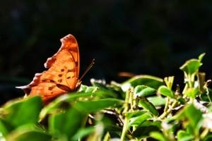 butterflies 004 (800x534)