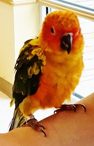 parrot baby 7 mos (413x640)